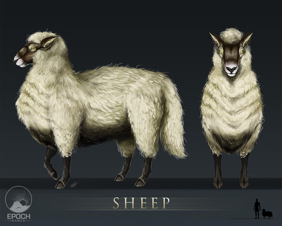 Northern Sheep by Amanda Starlein