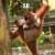 A_Drunk_Orangutan