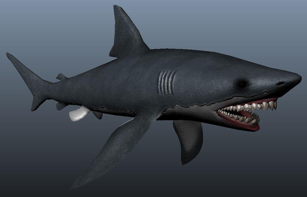 WIP Shark 2