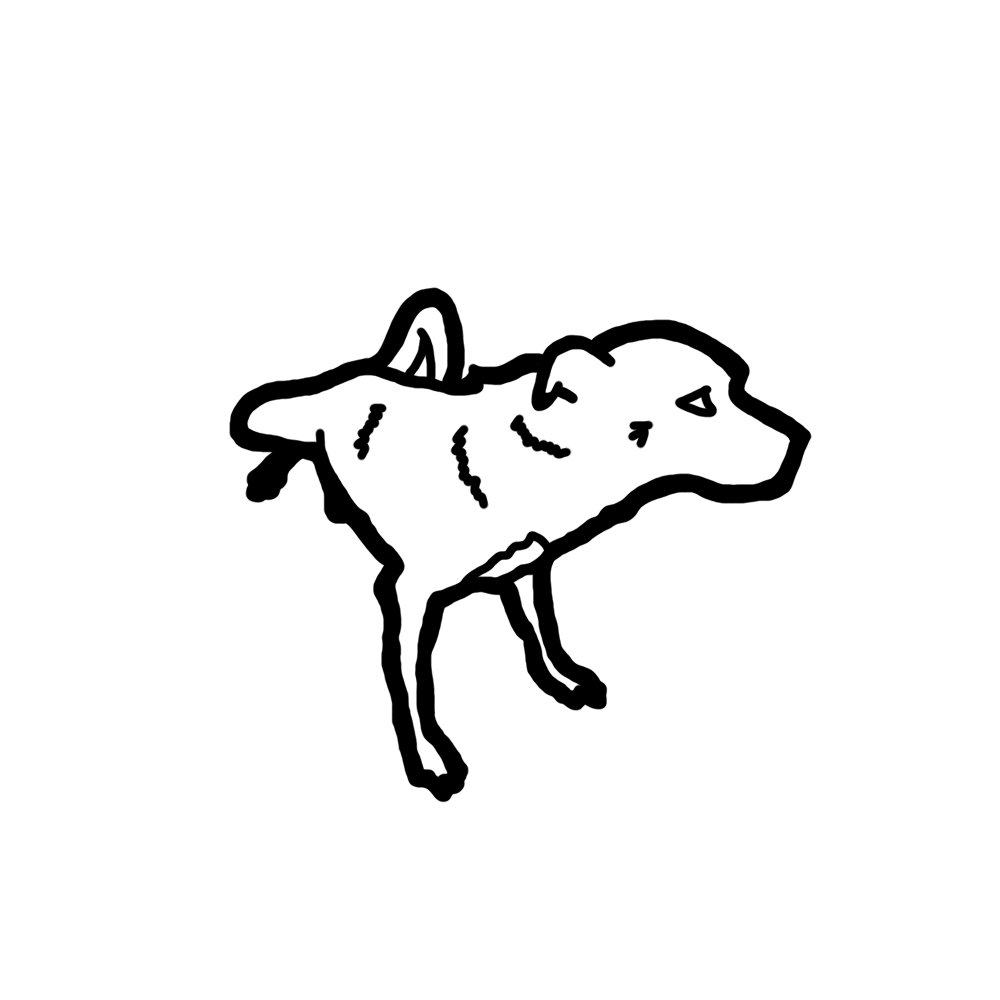 Icon B 0