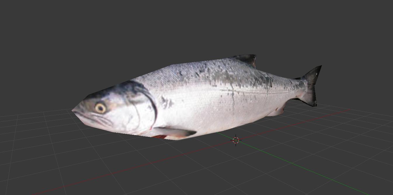 Salmon concept 2