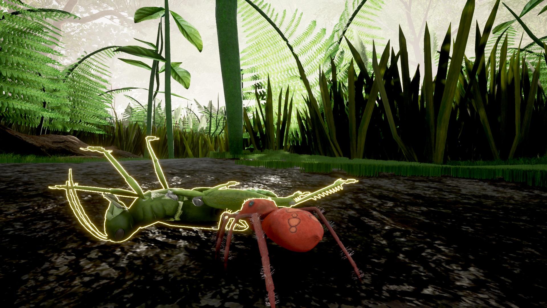 Grasshopper Encounter