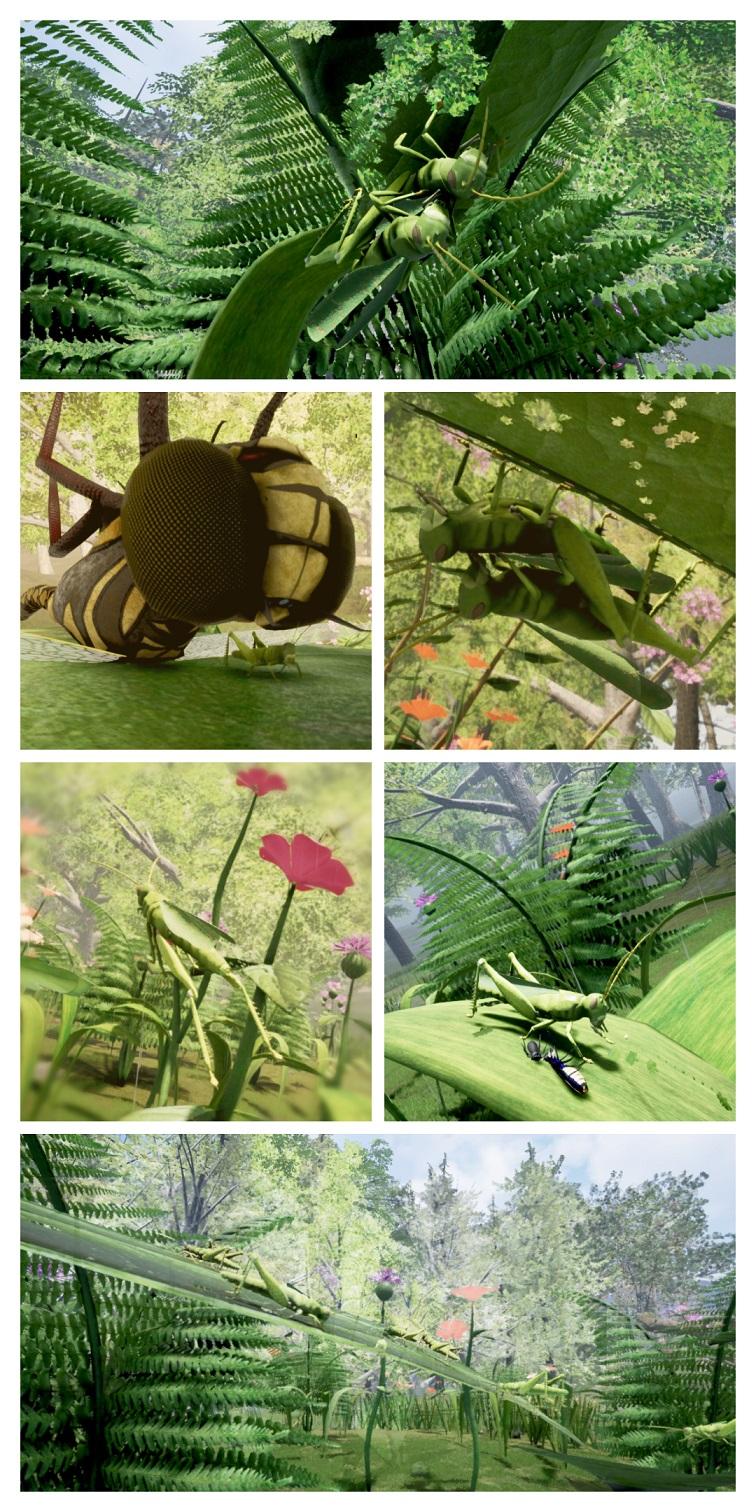 Grasshopper Lifecycle P1 70pc