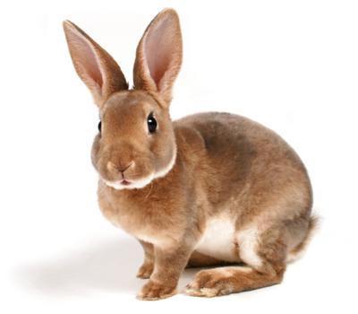 rabbit stats 490