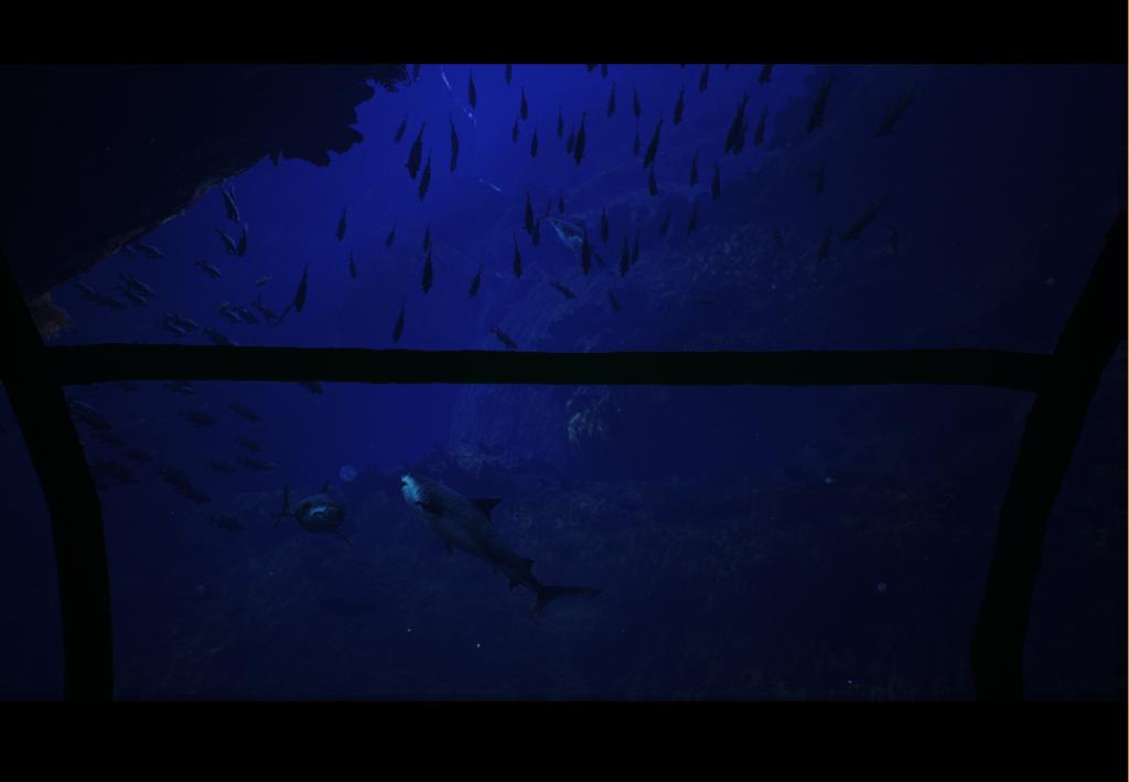 Shark3 Crop 1024x709