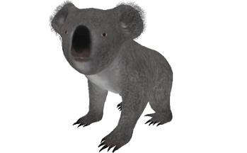 KoalaBear001