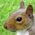 squirrelmcnutsy