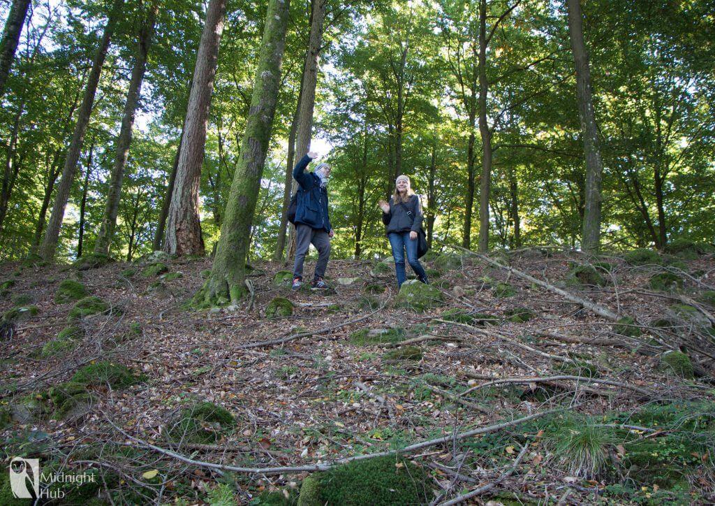 skog11 mh 1024x724 1