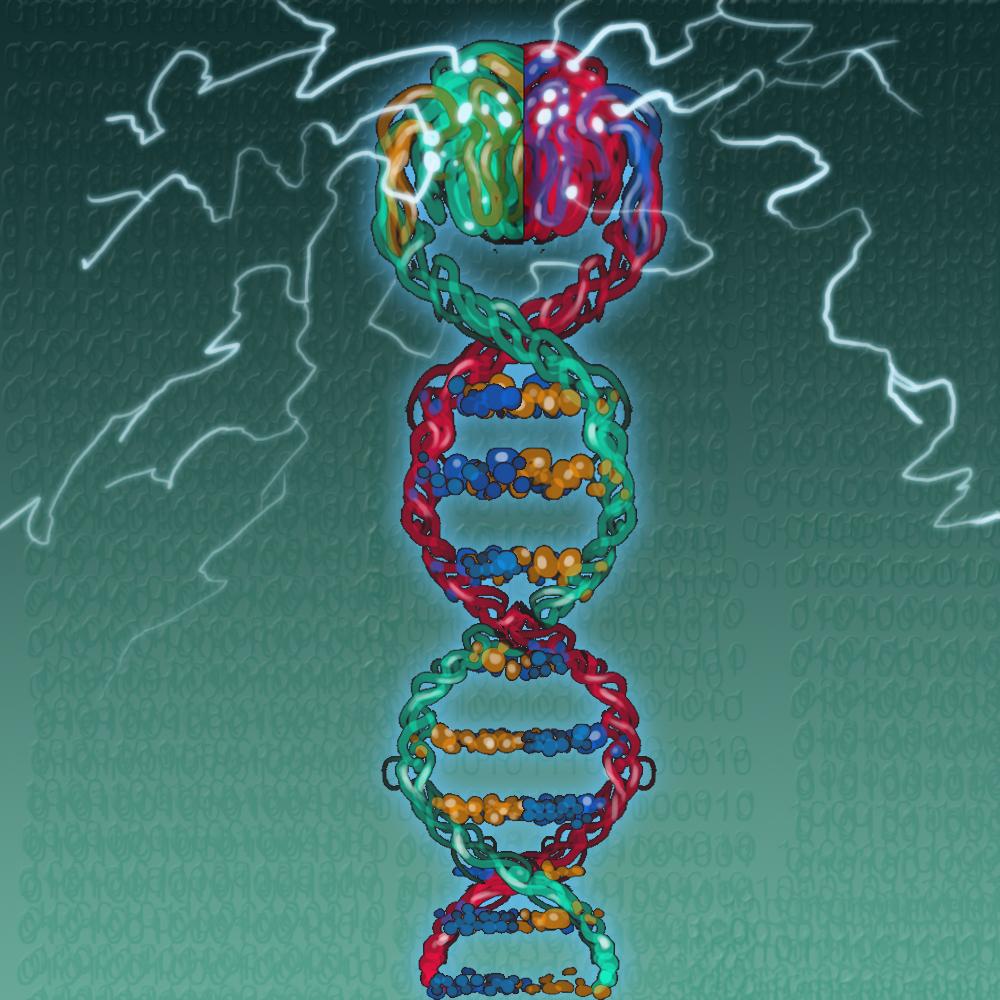 DNK pamyat2 copy