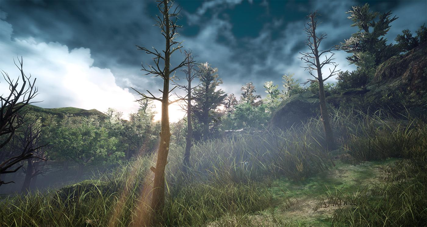 Aclendi Woods