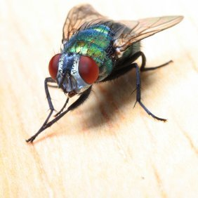 getting rid of flies guide l