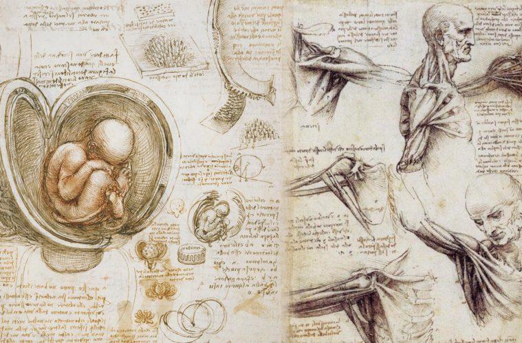 Leonardo da Vinci Anatomy Refere