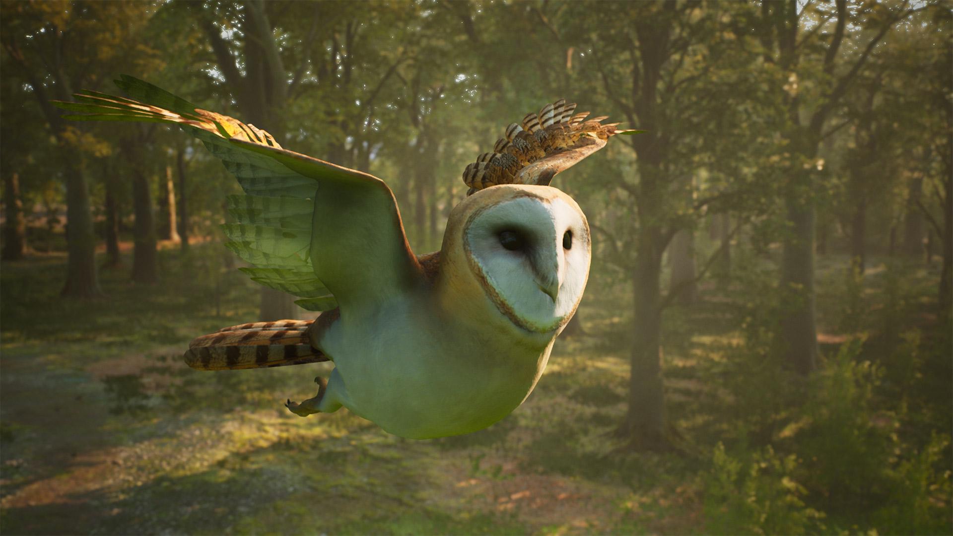 barn owl screenshot