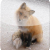 FoxyBit