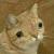 Karin_Cat