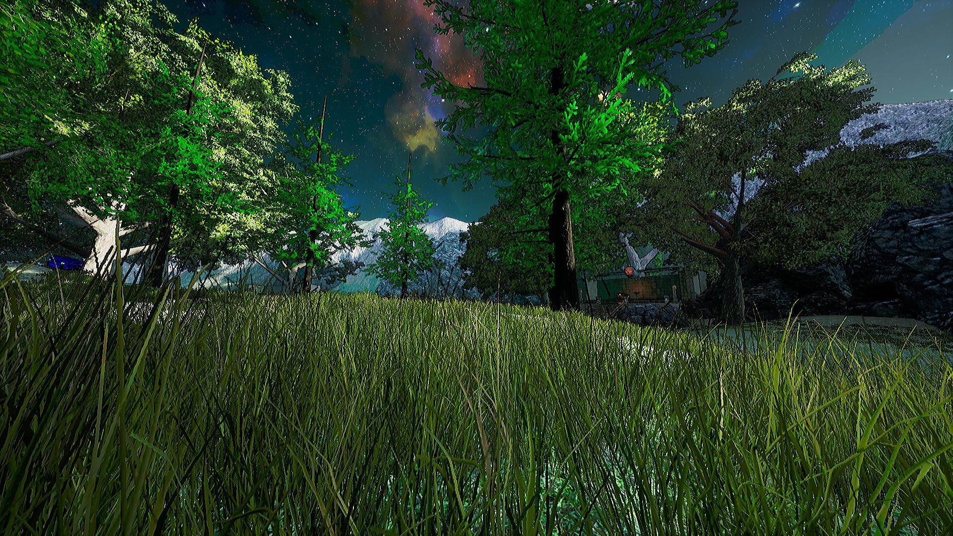 Cicuma_Forest_2.jpg
