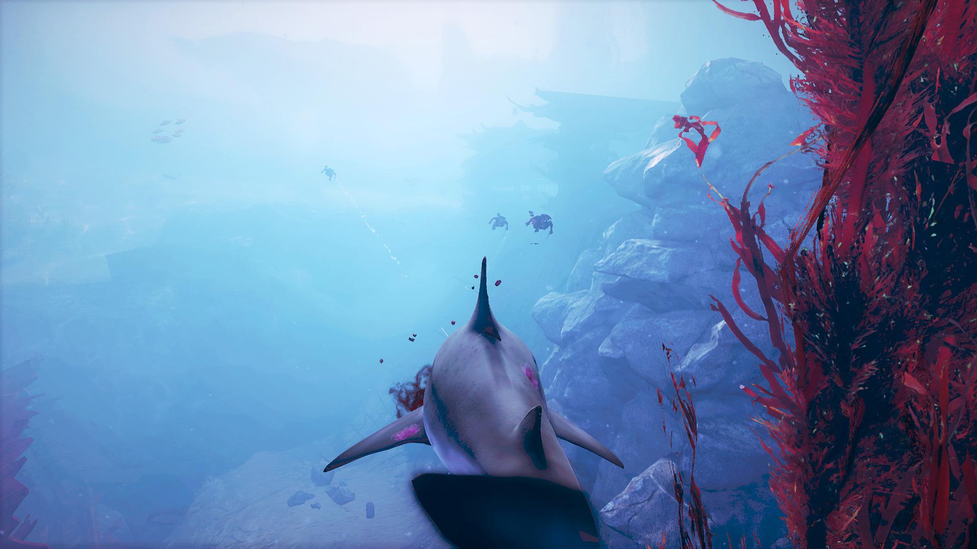 Screen_Divers.jpg