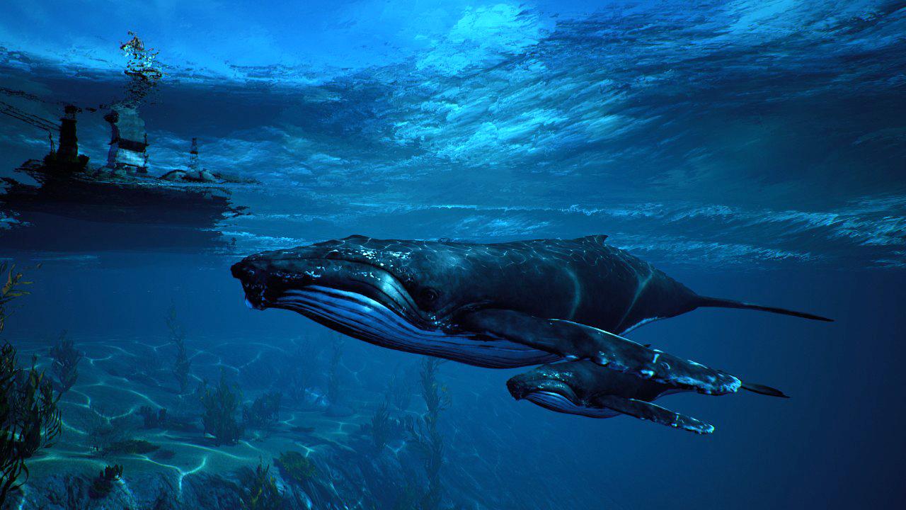 Screen_Humpback_Whale_Pod.jpg